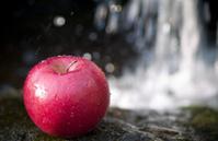 Cold Wet Crisp Apple