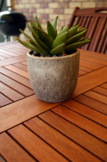 Backyard table with pot plant