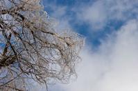 Frozen curles