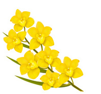 Holiday yellow flowers background. Vector.