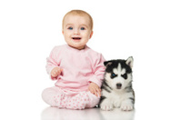 Little girl with a puppy husky