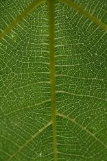 macro de uma folha
