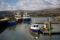 Boats in harbour - dock