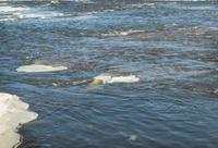 River in mouvement in winter