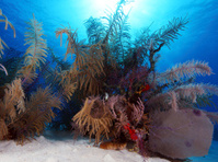 Colorful Coral Landscape of Caribbean Sea
