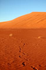 Footsteps in Red Sand Dunes in Namibian Desert