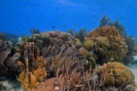 Coral reef Landscape