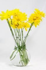 Vase 'o Daisies
