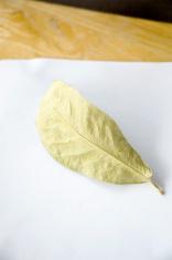 yellow dried leaf