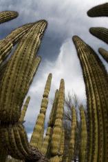 Cacti Towers