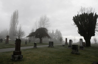 Cemetary and fog