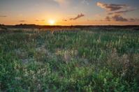 Sunset light on fields