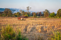 Dried Rice Field with Abandoned Farmer Hut