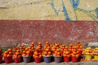 Tangerines and yellow Mangos