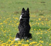 Dog sitting and waiting.