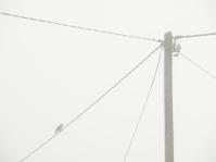 Bird on a power pole