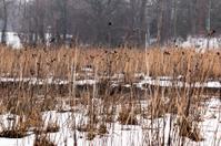 Snow on the Marsh