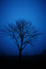 Bare tree at dawn