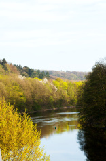 River Ruhr in spring