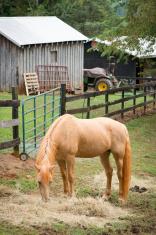 Beautifull Feeding Horse