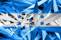 Honduras Flag on cannabis background. Drug policy. Legalization