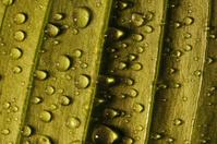 Droplets on the leaf
