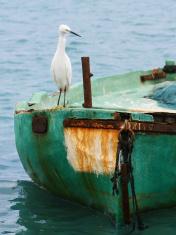 White heron bird on a boat