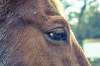 Cross Process horse eye 3