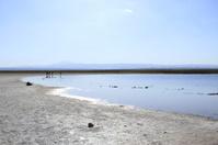 Laguna Cejar, Atacama, Chile