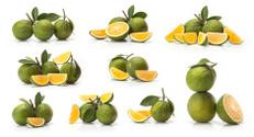 green sweet oranges fruit and orange wedge