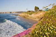 La Jolla Cliffs with Yellow Flowers