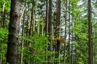 adventure scenics in forest