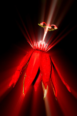 Passion Laser