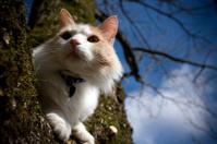Feline Friend sitting in a tree