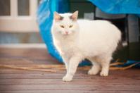 Beautiful Stray Cat Walking Away From Shelter