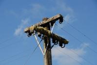 Mossy power pole