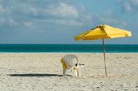 Solitude on the Beach