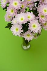 Chrysanthemum bunch in a vase