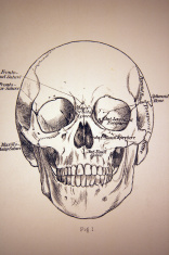 Medical Illustration from of a Skull
