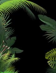 Tropical Border Dark
