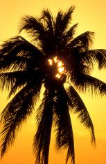 Palmtree Fireworks