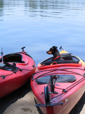 Kayaking Miniature Pinscher