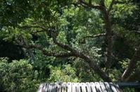 rain forest canopy platform