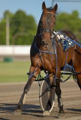 Harness horse Racing
