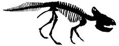 Dinosaurs bones