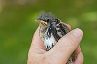 Bird in the Hand ... Tight