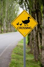 Duck crossing information warning sign