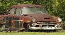 Alligator and old car.