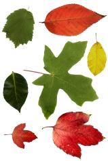 Beautiful Natural Leaves