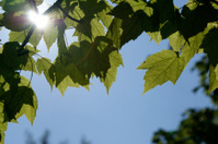 Sun shining through the leaves, leaving a small rainbow